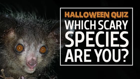 Answer our spooky questions to see what species you should dress up as this halloween!