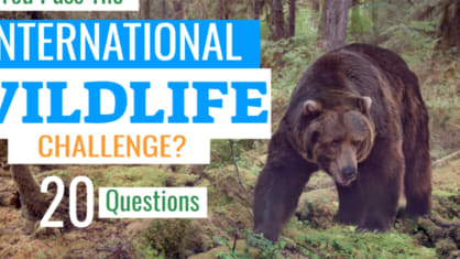 These twenty questions will let you know! The IWC is a wildlife awareness test that assesses your ability to identify basic facts, as well as the broad habitat of key species. On what continents are Grizzly Bears found? What about hedgehogs? And which species are critically endangered?