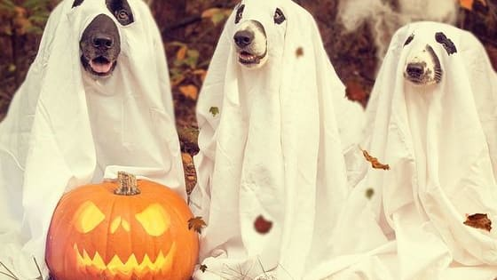 Lost for costume ideas for your pooch? Not sure what your pet's costume says about you as a dog parent?  Take this handy quiz to get some inspiration! From crafty and clever to classic canine, we've got some great ideas for you.