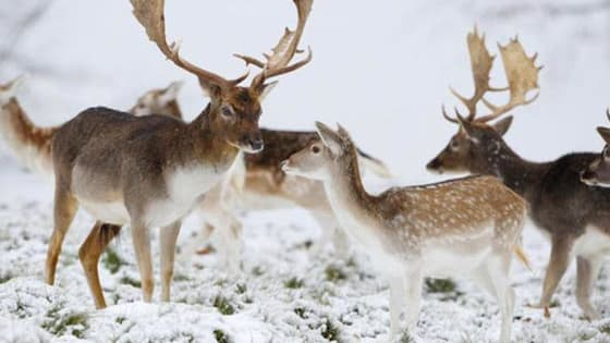 There are many animals that love the cold weather. Can you name all 15 of these Winter Animals?