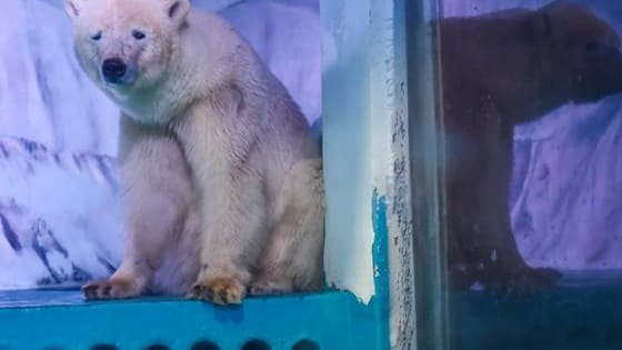 2016 might be trash, but at least Pizza the Polar Bear might be free!