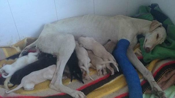 The world might seem like a dark place right now, but this mamma dog had one job; to save her puppies.