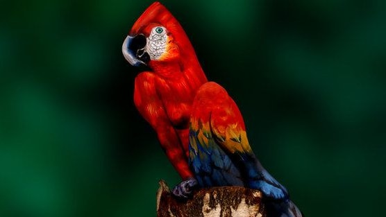 Check out this beautiful parrot...