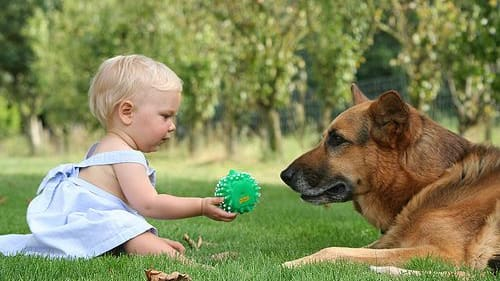 A new study published by the University of Arizona says that dogs and infants may communicate in the same way. Should we be treating dogs differently?