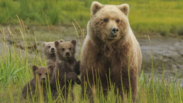 Trump recently signed an order rolling back restrictions on hunting predators in Alaska wildlife refuges, targeting bears and wolves. Find out more here.
