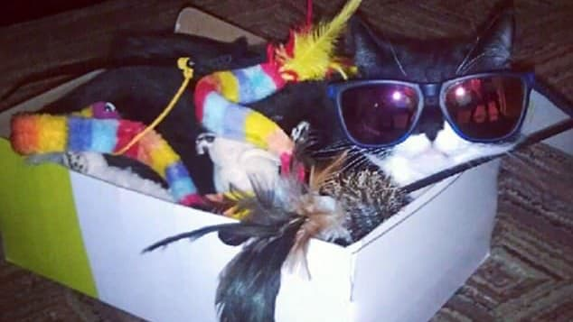 These pet sitters have gone wilder than the animals they're watching!