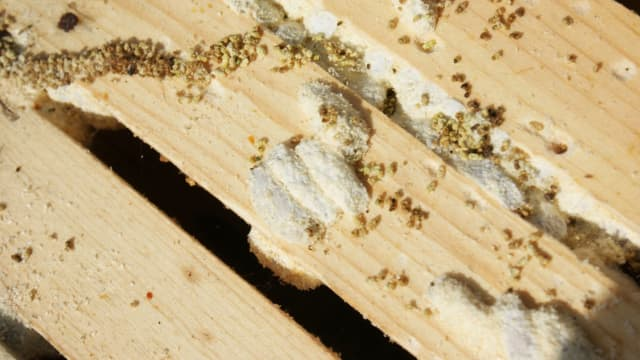 Found to be plastic eaters on accident by a researcher and beekeeper, wax worms might help the world solve its plastic problem. Find out more here!