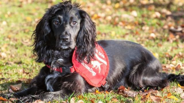 Molly, a cocker spaniel, has been trained to help find missing cats without scaring them away! Find out more here!