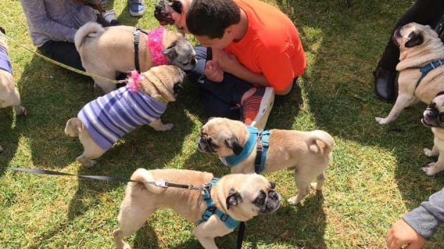 14-year-old Andrew, a boy living with autism, had never had a birthday party before for fear of no one showing up. But this year, more than 80 of his favorite kind of dog came to wish him a happy birthday! Find out more here!