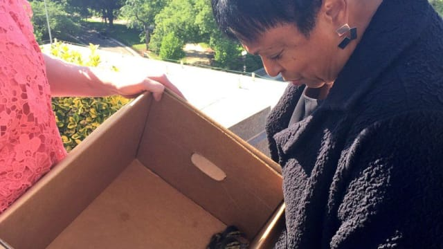 After a joint effort between the Librarian of Congress and DC Police, a dozen ducklings and their mom were rescued from the roof of the library of Congress on Tuesday. Find out more here!