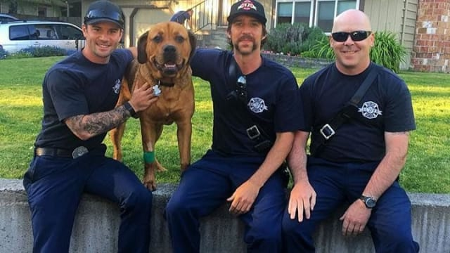 When they got a call to rescue a dog from a burning building, the firefighters of Snohomish County Fire District 7 of Washington state rushed in to save him and even continued efforts when it looked like all hope was lost. Find out more here!