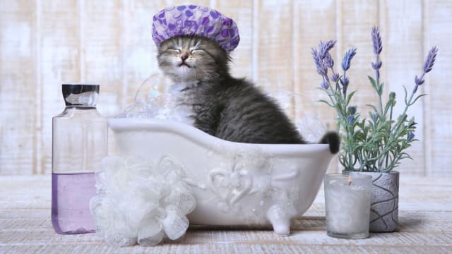 Keep you and your kitty happy and clean!