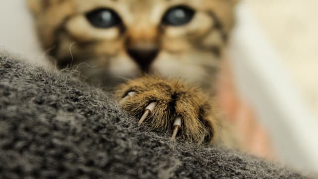 Your cat has claws for a reason.
