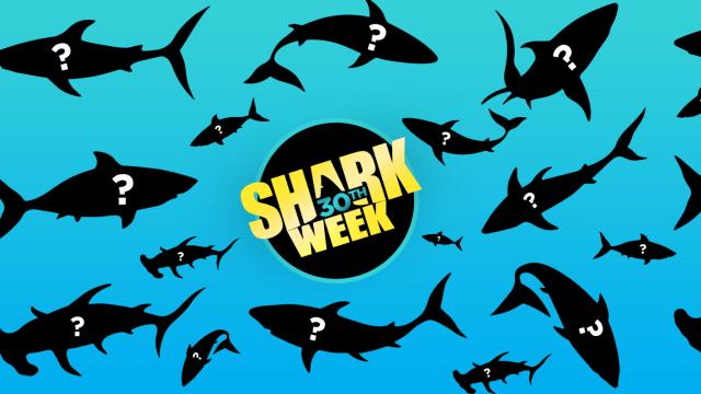 Новий «Тиждень акул» на каналі Discovery Channel – нові факти про морських хижаків!