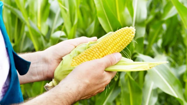 We really need GMOs. Not only are the health risks unfounded, but the very survival of the human race depends on them. Is it worth forgoing future generations?