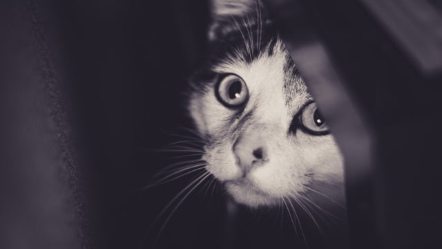 A stressed cat can act out by peeing outside its litter box, hiding, or biting. To get to the bottom of your cat's stressed behavior, it's important to look for triggers. Here are five things that could be causing stress for your pet cat.