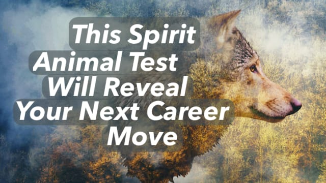 Animals are very intuitive creatures! Spirit animals can guide you on your life journey and take you to new and exciting places. Choose the animals you resonate with most and see what your next career move is.