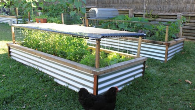 A raised garden bed has many advantages that you will make your plants thrive and make you a happy gardener. For example, it has better drainage, improved aeration and allows you to control weeds easily.