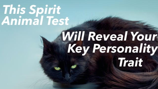 Animals have special powers, they are conduits for intuitive knowledge. Which animal draws you in? Choose the right ones and we'll tell you your key personality trait.