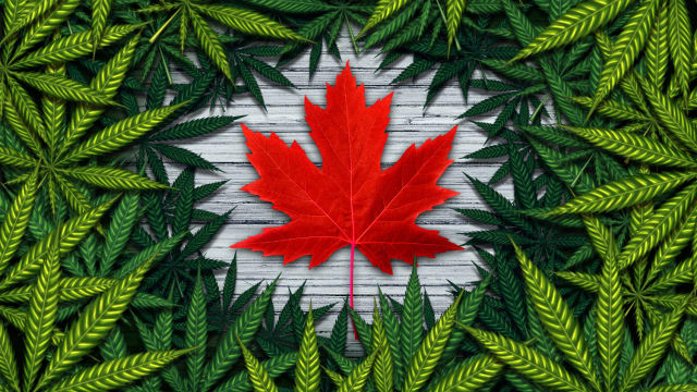 As Canada begins to ramp up its Cannabis sales, what effects can this have on the rest of the world? Will more countries follow suit?