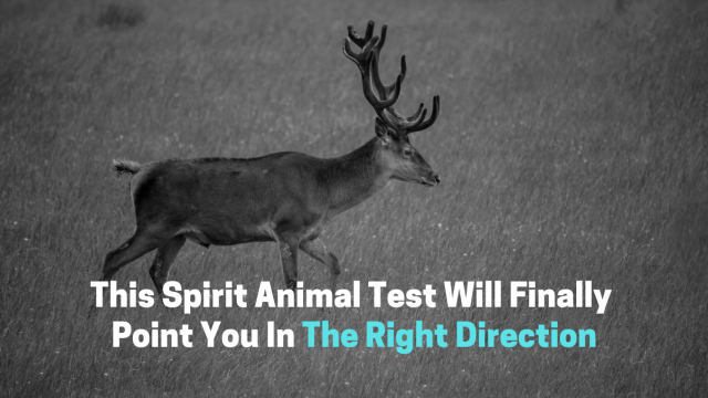 You've been hemming and hawing over what direction your life should be going in. Well your trusty spirit animals will point you in the right direction!