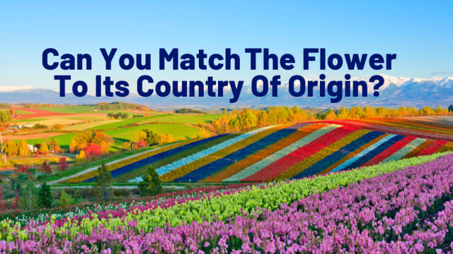 Ever wonder where your favorite flowers originated from? Take this quiz and test your flower knowledge in honor of National Flower Day!