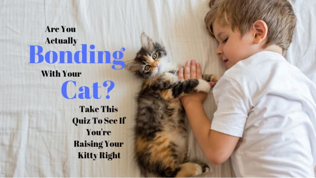 Cats are secretive little beings. It's difficult to tell what exactly is going on in those clever minds. Answer these questions to see if you and your cat have bonded like you think you have.