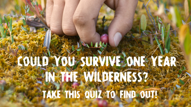 It's a jungle out there. You may think you know what to do when you're confronted with a bear, or stranded on a desert island, but this survivalist quiz might say otherwise. Do you have what it takes to spend an entire year in the wilderness? Take this survival quiz to find out.