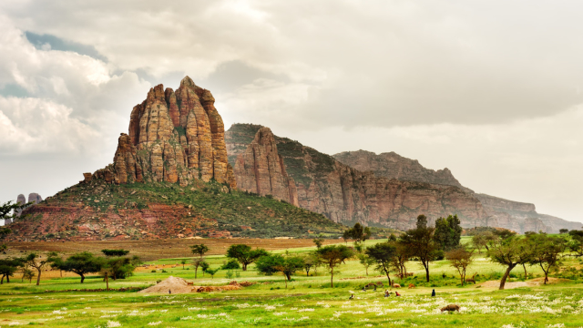 In Northern Ethiopia, the spiritual and natural world are completely connected; with forests disappearing at an alarming rate, an even greater onus is placed on the church, and on the (seemingly) unbreakable bond between faith and nature. Find out more below.