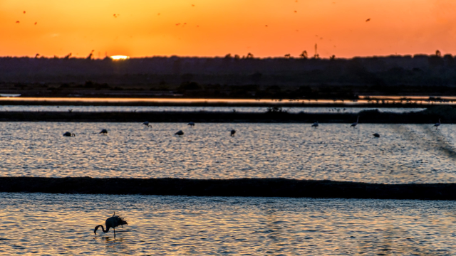 Hace cincuenta años, exactamente el 16 de octubre de 1969, que se decretó que Doñana pasaba a ser parque nacional. Un parque nacional, hogar de especies tan emblemáticas como el lince ibérico, que en 1980 pasó a ser Reserva de la Biosfera por la Unesco.  En 1994, la misma entidad lo catalogó como Patrimonio de la Humanidad.   ¿Aprovechando que es el día de las aves, cuánto sabes de esta joya de la naturaleza?