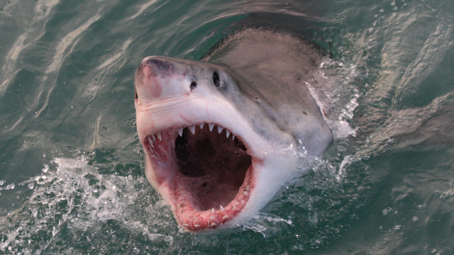 Many of us are afraid of sharks  - but are you afraid of THIS common animal that kills FAR more people in a year than sharks do? Who knew?