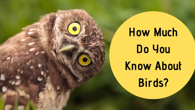 How Much Do You Know About Birds?