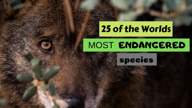 Can You Name All These Amazing Yet Almost Extinct Animals?