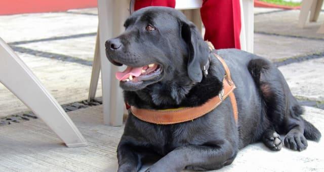 La carta que Franco, un perro guía en el CIW, quiere que leas