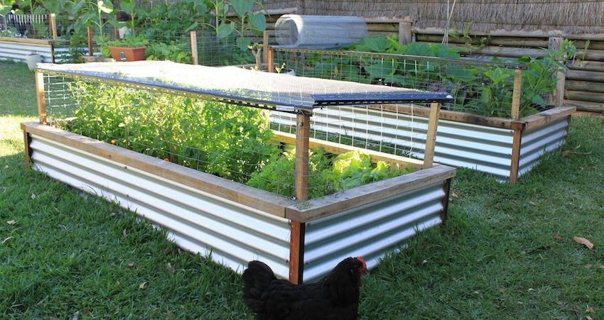 Best Raised Garden Beds Important Things You Need To Know