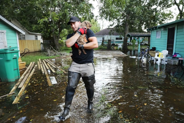Here, a man dons a pair of wading boots to carry a small dog away from its flooded home.
