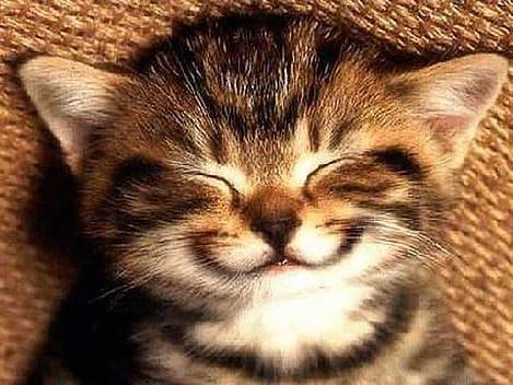 Sorria!