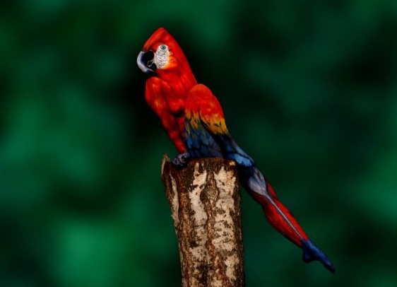 Painting or real life parrot?