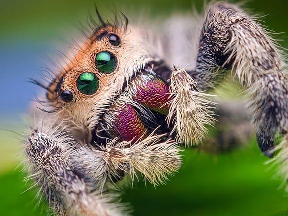Não é essa aranha fofinha da foto