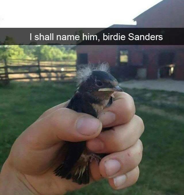 President Birdie....