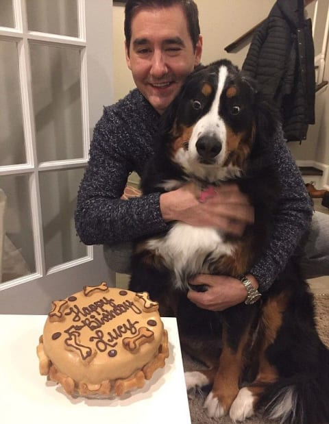 What Do You Think Of This Adorable Dog And Her Love Cake As Much Lucy Does Talk To Us About It In The Comments Below