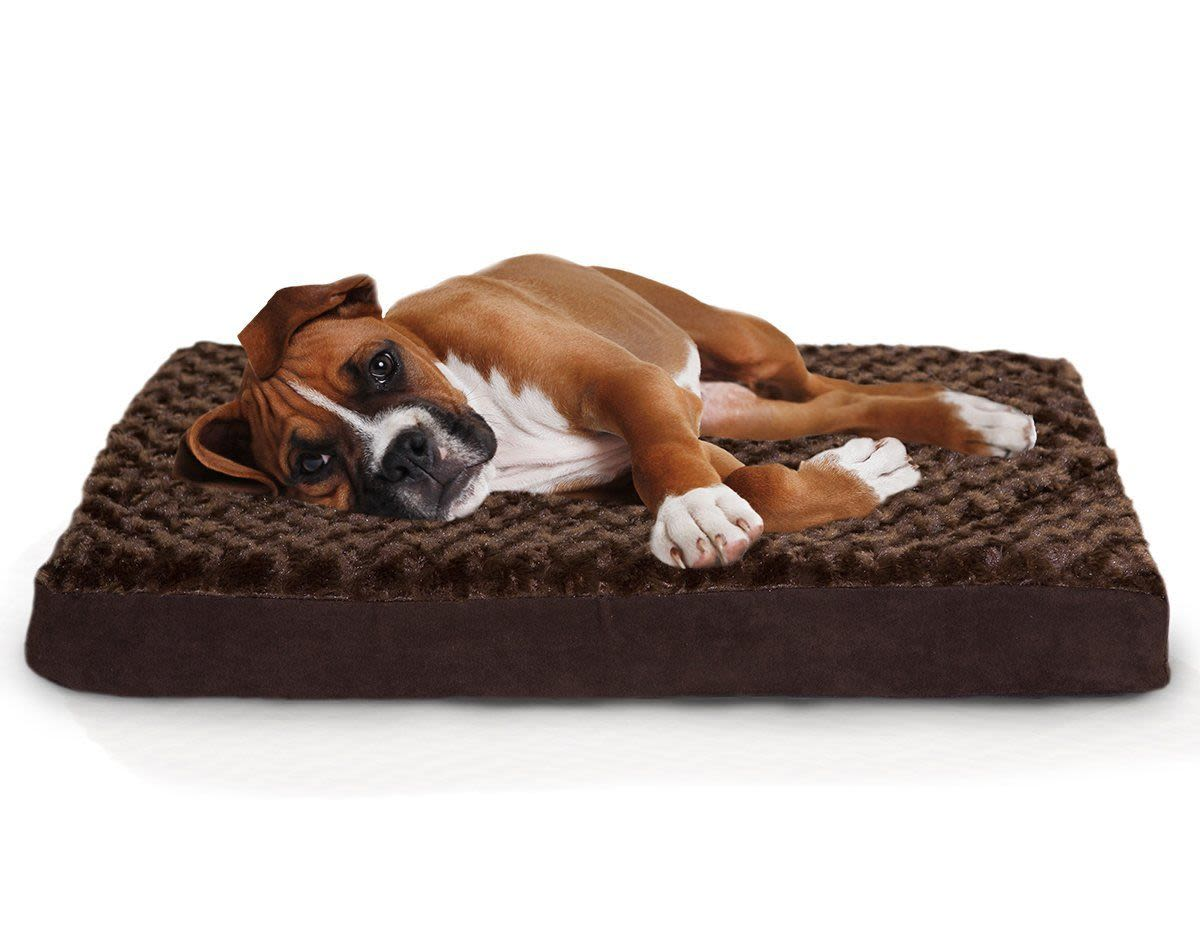 Completely new Here Are The Best Dog Beds To Make Your Pup Feel Like Royalty  PE96