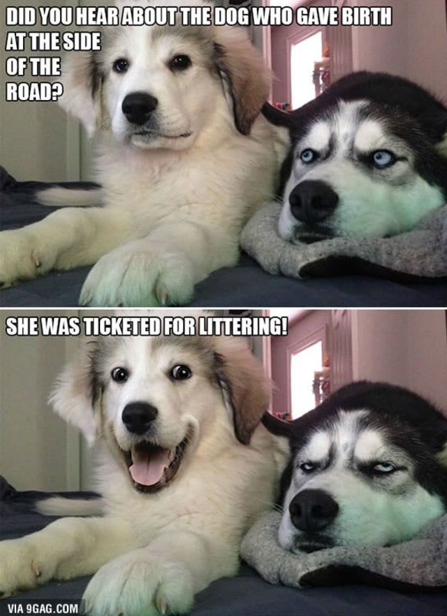 Top Dog Puns You Haven T Heard Yet