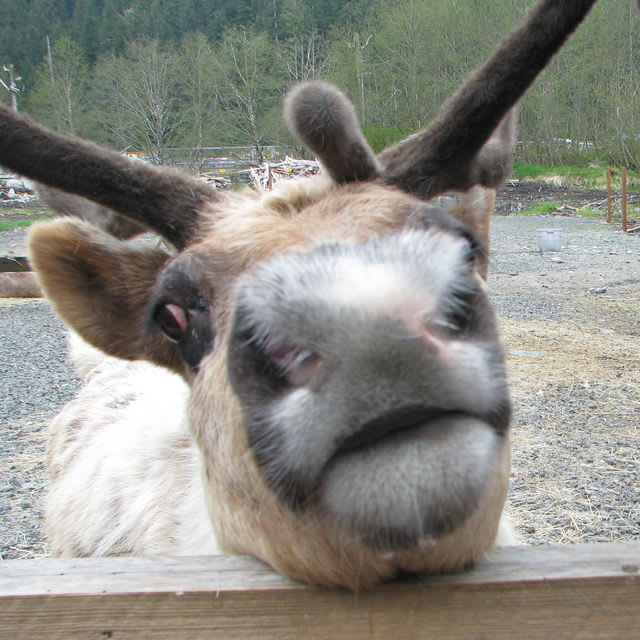 You seem friendly, but have you ever laughed at and called another reindeer names - or even not let him join in any reindeer games?
