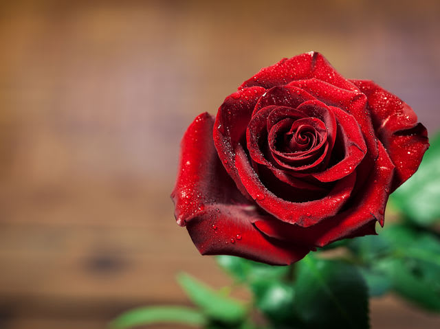 Der Valentinstag Erfreut Auch Die Floristen Besonders. Denn Jedes Jahr  Werden In Österreich Rund .