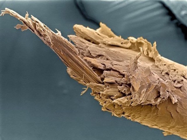 split end under microscope