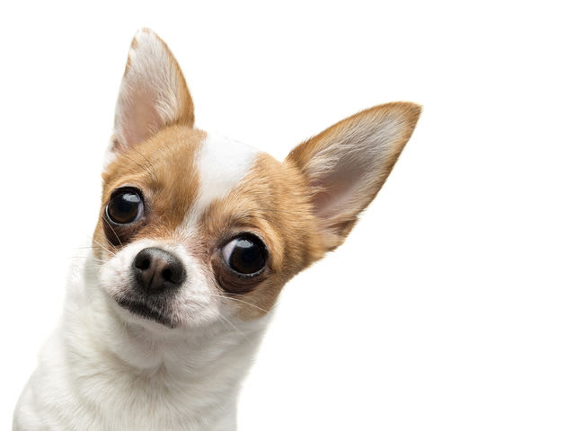 Thumbnail Dog Trivia