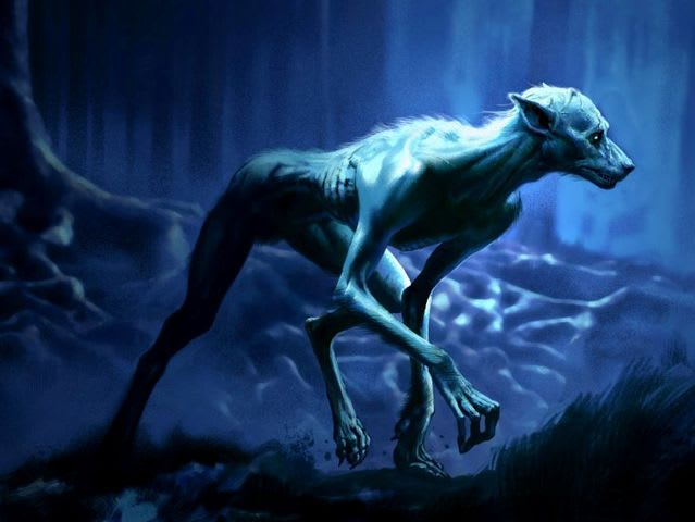 How can you distinguish a werewolf from a natural wolf?