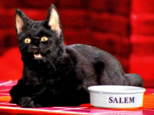 How old is Salem the cat?