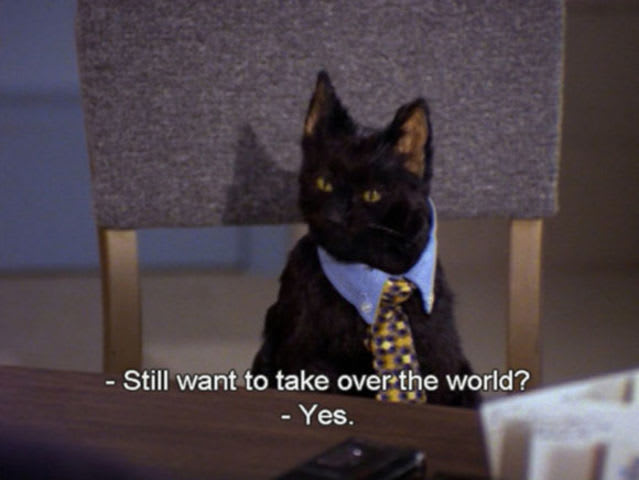Why is Salem doomed to be a cat forever?
